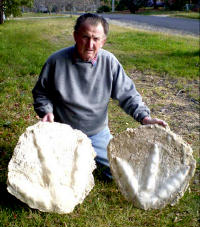 Rex Holding Moa Casts
